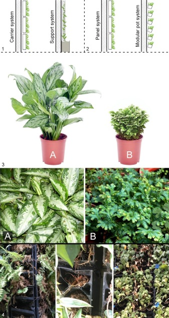 green wall selection
