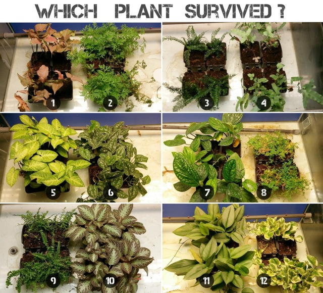 plant hunger games