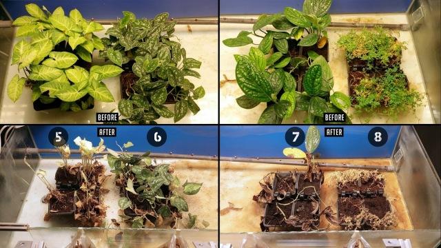 plant lighting study